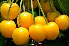 Черешня Дрогана желтая, фото 2