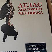 Атлас анатомії людини Синельников тому 3