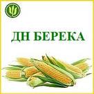 КУКУРУЗА ДН БЕРЕКА ФАО 390, (Маис Черкассы), фото 2