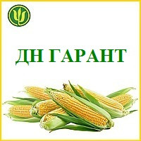 Насіння кукурудзи ДН ГАРАНТ (ФАО 200) 2фр. 2020 р. в. (Маїс Черкаси)
