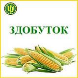 Семена кукурузы ЗДОБУТОК (ФАО 290), 2018 г.у. (Маис Черкассы), фото 3