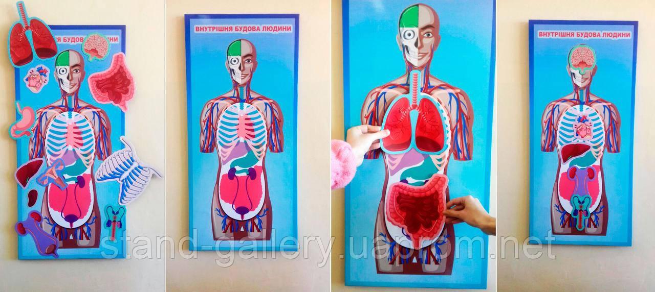 Інтерактивний стенд в кабінет біології - анатомія людини