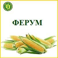 КУКУРУЗА ФЕРУМ (ФАО 180), Маис Черкассы