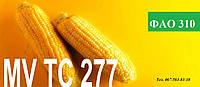 Семена гибрида кукурузы МV TC 277 ФАО 310
