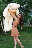 Плюшевий ведмедик Тедді кремовий 160 см, фото 4