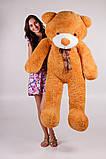 Плюшевий ведмедик Тедді карамель 180 см, фото 3
