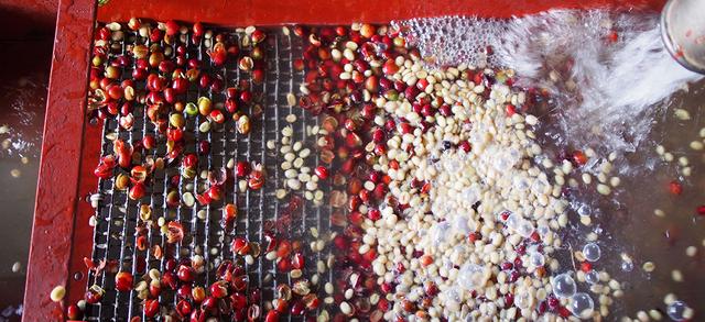 арабика Колумбия Эксельсо в зернах, заказать натуральный кофе для приготовления дома в Турке