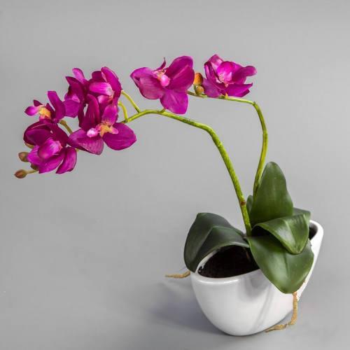 Вазоны для орхидей прозрачные