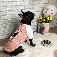 Бомбер для собак Dog Baby Chocolate