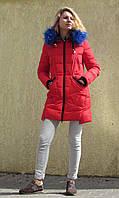 Яскравий молодіжний пуховик - парка Covily 17-15, червоний із синім хутром, фото 1