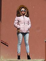Жіноча зимова приталена куртка з хутром єнота, пудрова