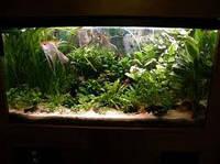 Люминесцентные лампы для растений и аквариумов OSRAM FLUORA T8 G13