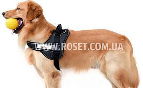 Нагрудный ремень для собак  (шлея) - Pet Chest Straps