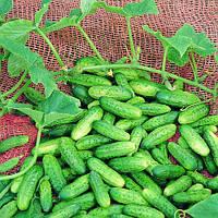 Семена огурца  Акорд F1 (Akord F1) 1000 сем., женского типа цветения