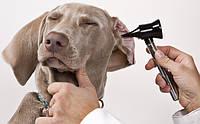 Уход за глазами и ушами собак