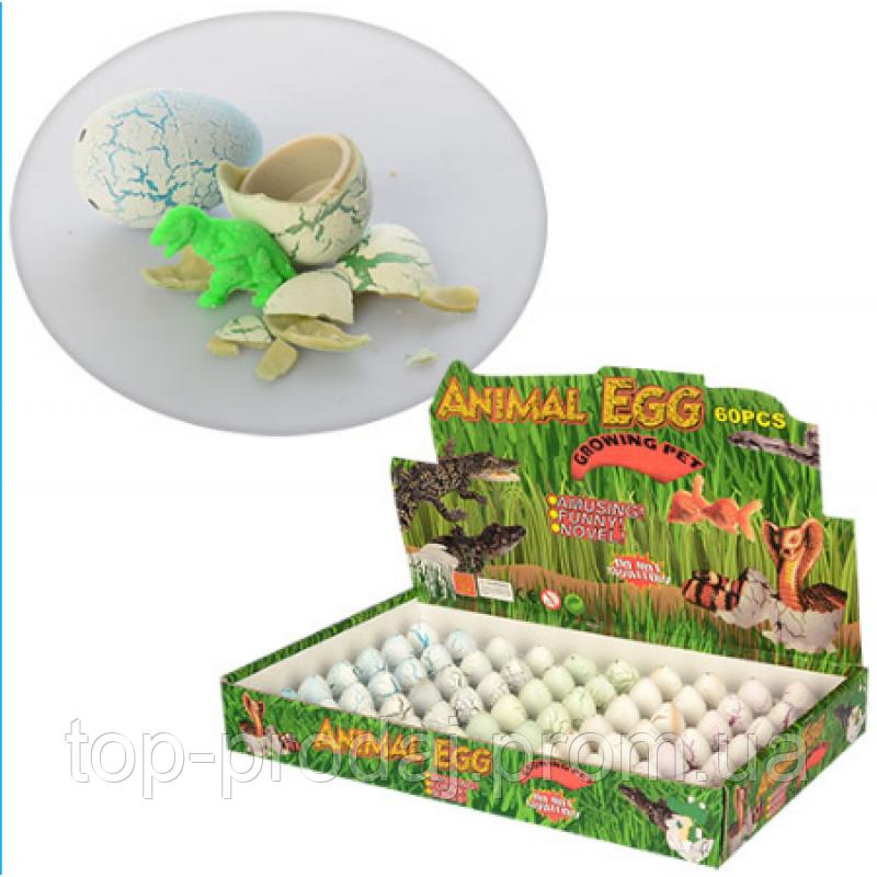 Яйцо 686 3см, животное-растущее, (6цветов) в дисплее, 29-18,5-4см, растущая игрушка