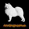 Табличка собаке., фото 4