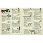 Атлас животных. Аладжиди, Чукриэль, фото 3