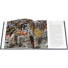 Мои знакомые леопарды. Малеев Валерий