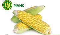 Семена кукурузы Платинум ФАО 340 (Маис)