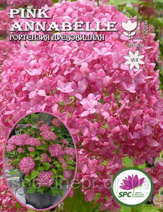 Гортензия древовидная Pink Annabelle , фото 2