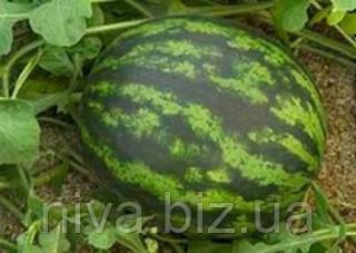 Онеіда F1 насіння кавуна типу Крімсон Світ Rijk Zwaan 100 насінин