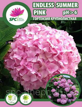Гортензия крупнолистная Endless Summer Pink, фото 2