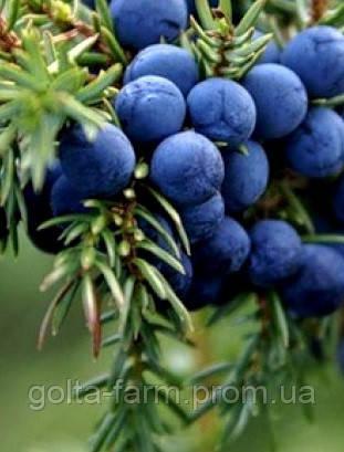 Плоды можжевельника