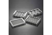 Плашка на 24 лунки с плоским дном для культивирования культур клеток