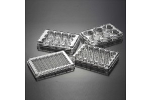 Плашка на 12 лунок с плоским дном для культивирования культур клеток