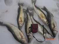 Рыбацюги в погоне за ночным «разбойником»