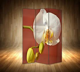 Ширми з квітами