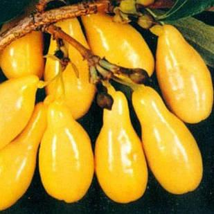Саджанці Кизилу Бурштиновий - середній, жовтий, урожайний
