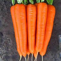 Морковь / Морква  ЭЛЕГАНЗА F1 / ELEGANZA F1 / ЕЛЕГАНЗА F1 (1.4-1.6) - 100 000 шт.  Nunhems
