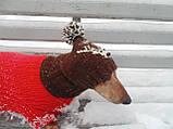 Шапка для собаки,шапка для таксы,одежда для домашних животных, фото 5