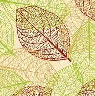 Трансферний лист для шоколаду Gordon (Листя), IBC (Callebaut) 315*415мм, 1 аркуш