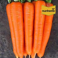 Морковь / Морква  БРИЛЛИАНС F1 / BRILLIANS F1 / БРІЛЛІАНС F1 (1.4-1.6) - 100 000 шт.  Nunhems