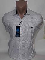 Рубашка мужская Gavi Galdo vd-0169 белая стрейч коттон в принт приталенная