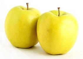 Саженцы яблони Голден Делишес (среднерослые ММ 106)