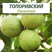 Привитые саженцы грецкого ореха Топоривский