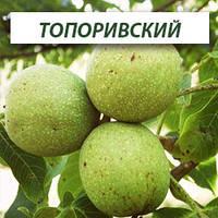 Грецкий орех Топоривский, трехлетний