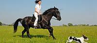 Не железный, но конь!!!