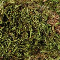 Trixie Terrarien Moos наполнитель мох для террариума, 200г
