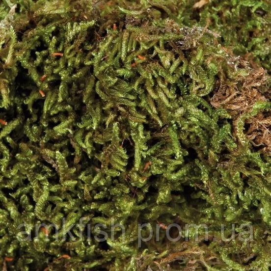 Trixie Terrarien Moos наполнитель мох для террариума, 200г - AMKfish.com Интернет-магазин аквариумистики и зоотоваров  в Харькове
