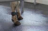 Резиновые коврики для коровника (КРС), фото 1