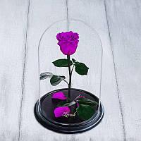 Роза в колбе standard фиолетовая 830016