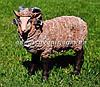 Садовая фигура Баран средний и Овца средняя, фото 2
