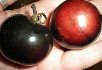 Семена помидора томат черный огонь 10 семян упаковка