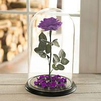 Роза в колбе Lux раскрытый фиолетовый 830029