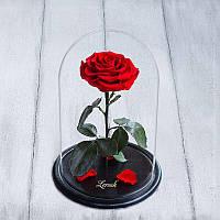 Стабилизированная роза в колбе Premium+ красная 830042
